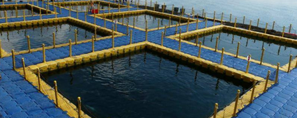 Offshore-Fish-Farming